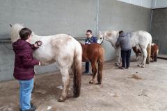 Paarden borstelen
